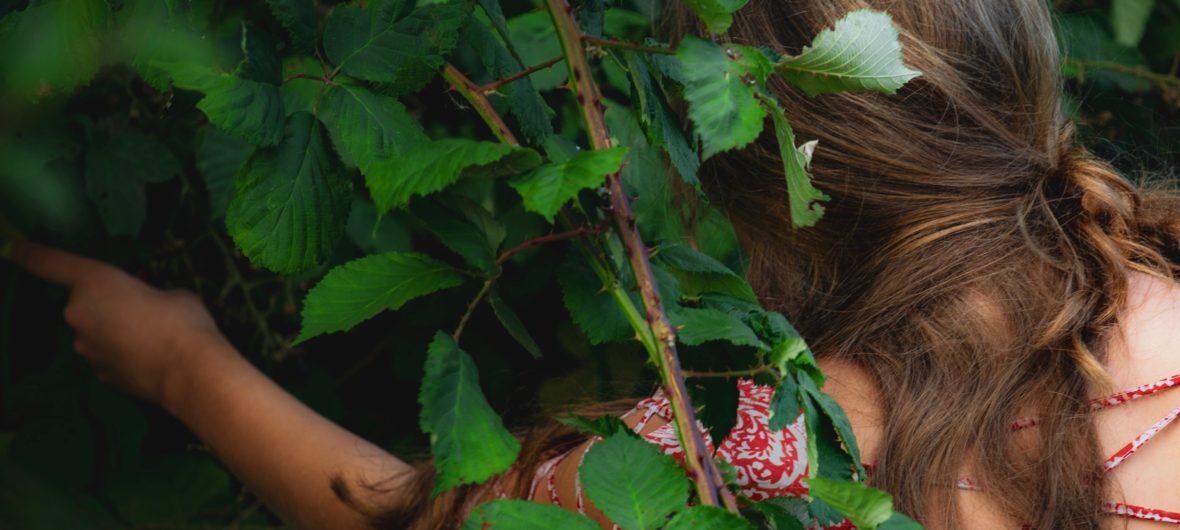 medlem på køge fælles jord i brombærbusken